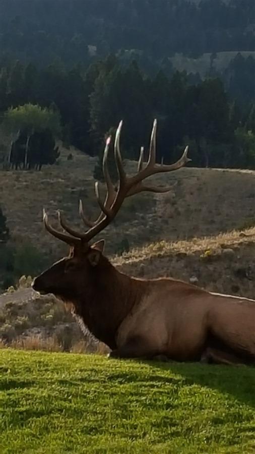 Bridger Canyon Hunting