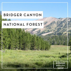 Bridger Canyon National Forest