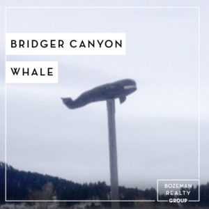 Bridger Canyon Whale