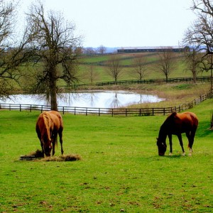 Bridger Canyon Horse Properties